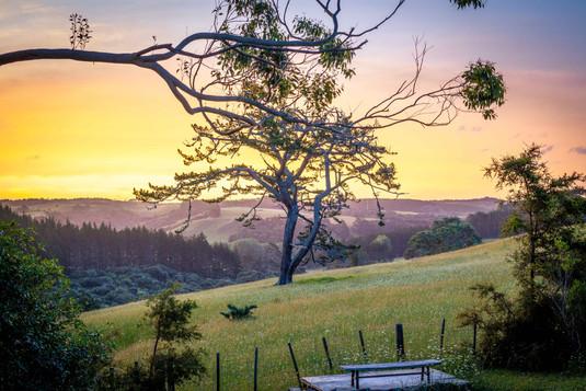Sunset from the Potting Shed - Tanglewood Retreat, Waimauku, NZ