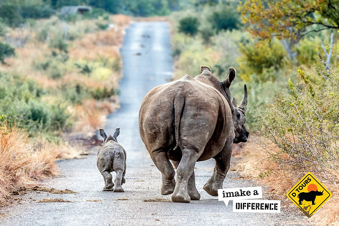 Rhino with Calf.  Photo Credit: Blair Eastwood DTours 2018