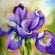 france iris.jpg