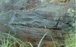 Taíno petroglyphs, Reef Bay. Photo: Rudy Patton