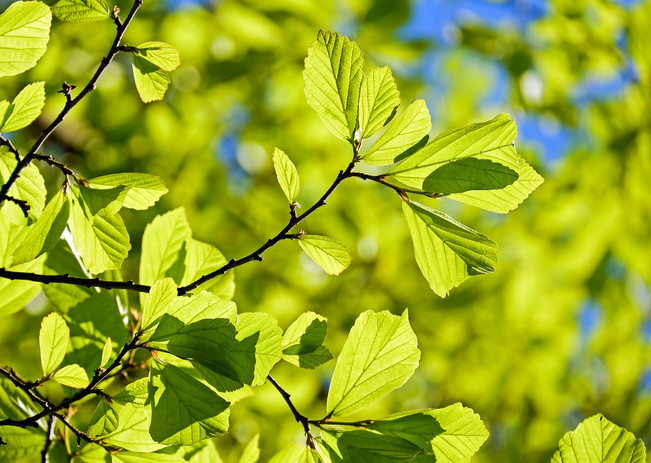 Baum von pixabay