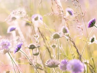 Heuschnupfen gepaart mit Frühlingsgefühlen -  ein ganzheitlicher Behandlungsansatz