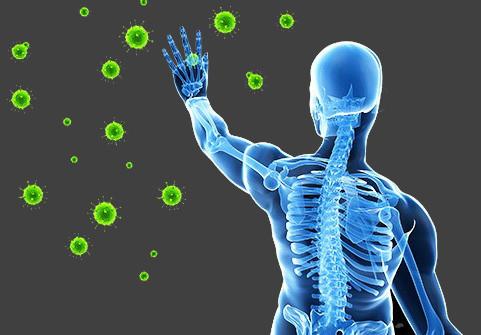 CBD Immunsystem