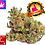 Thumbnail: CBD cannabis flowers | Harlequin from 3gr. up to 1kg
