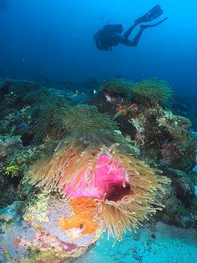 Plongée Nosy be, Plongée Madagascar, Centre de plongée Nosy be, Club de plongée Madagascar