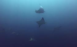 SHARK POIN