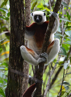 Excursion Nos be, Excursion Madagascar