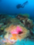 Plongée Nosy Be, Plongée Madagascar, Club de plongée Nosy be, Centre de plongée Océane's dream