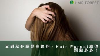 又到秋冬脫髮高峰期,Hair Forest助你頭髮多多!