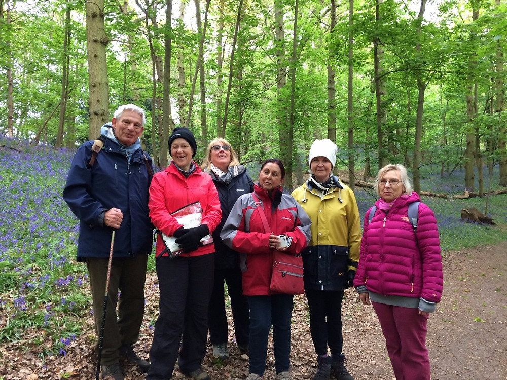 The Monks Eleigh walking group on a trip to Polstead though the bluebell woods known as The Dollops