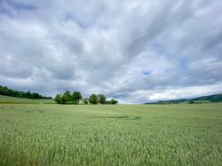 D12_LandsbrukslandskapInderøy