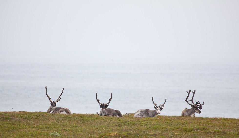 2011_Nord-Norge_Slettnes_10_1-X5.jpg