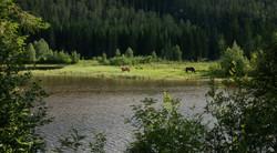 D9_Gressende hester2