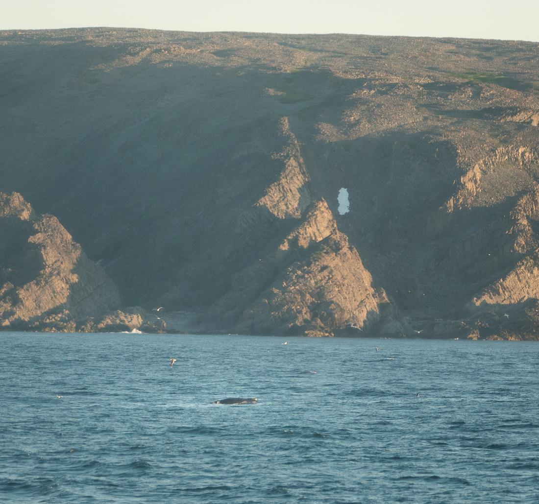Plutselig en hval!