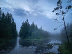D5_Magisk_tåke_gjennom_Finnskogen_på