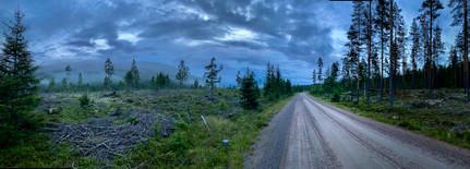 Får en boost av å sykle gjennom denne skogen