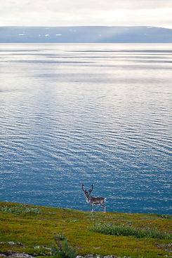 2011_Nord-Norge_Langs veien_46_1-X5.jpg