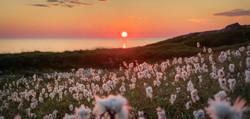 Nyksund_Solnedgang med myrull3