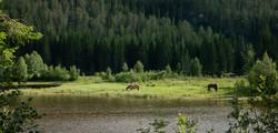 D9_Gressende hester