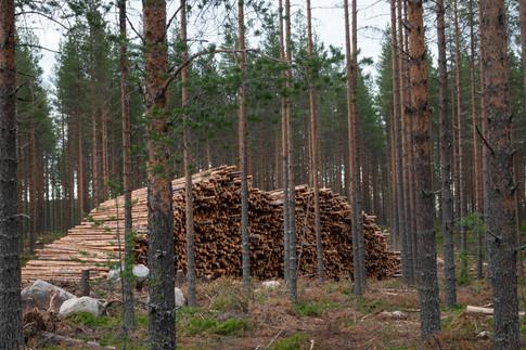 Tømmer. HerLeverFolkAvSkogen