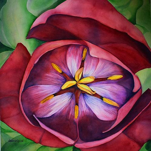 Open Sky Tulip