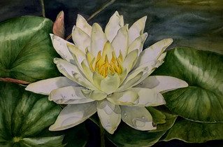 Fearless Nymphaea