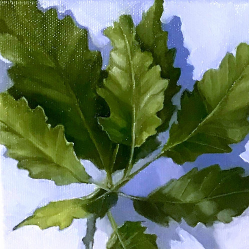 Oak Leaves on Blue