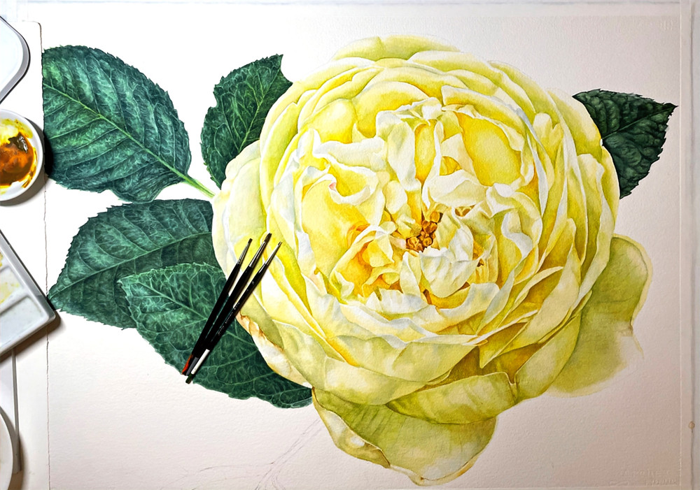 yellowr ose, rose painting, watercolor botanical painting