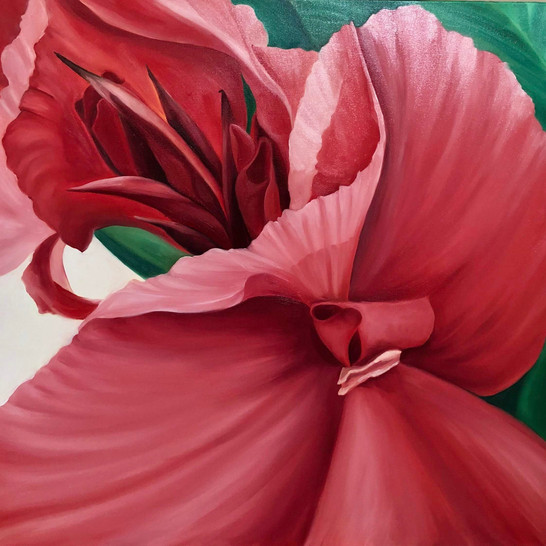 """Canna in Pink 30""""x30"""" oil on canvas"""