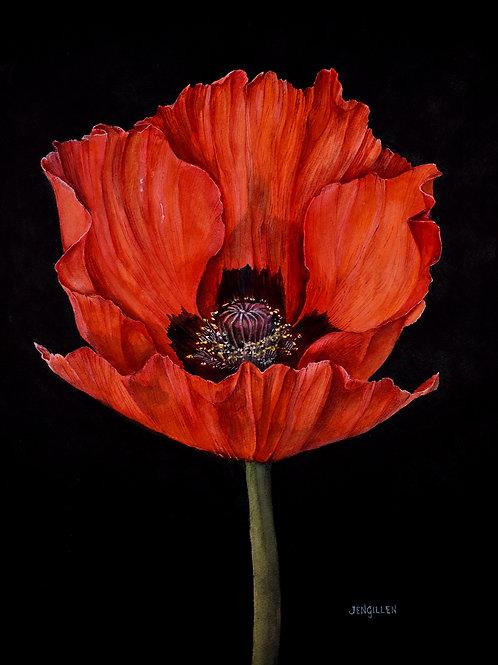 Red Poppy on Black