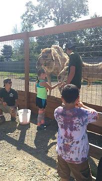 Feeding the camel.jpg