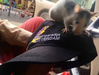 Rattencampagne Oktober update