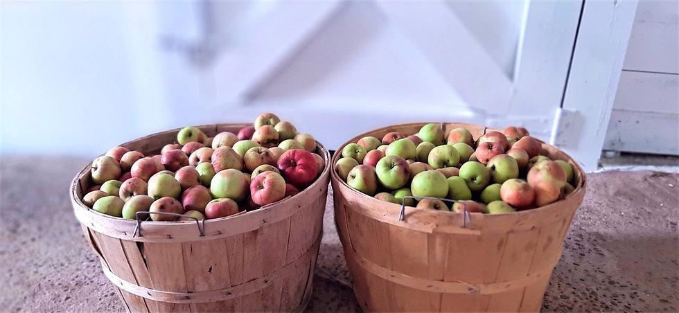 bushel apples_edited.jpg