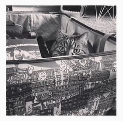 cat koffer