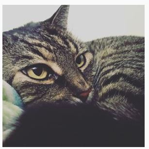 cat close
