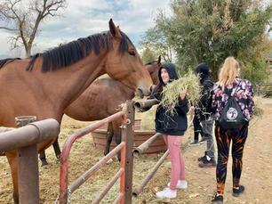 Feeding a horse