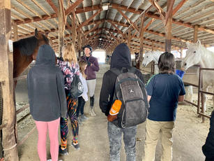 Learning about the horses