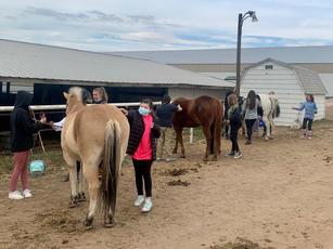 Brushing the horses at Cottonwood Riding Club