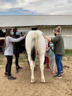 Brushing a horse