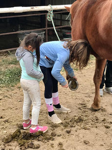 Cleaning the horse hoove