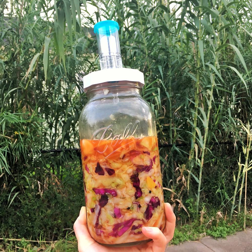 sauerkraut fermented food gut health