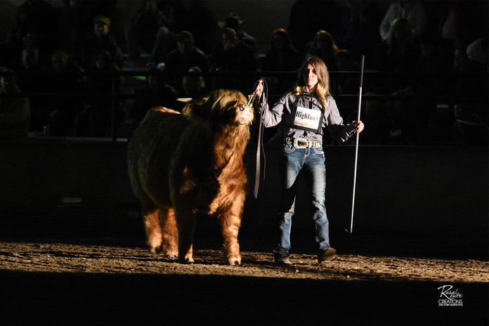World Beef Expo Supreme competition unde