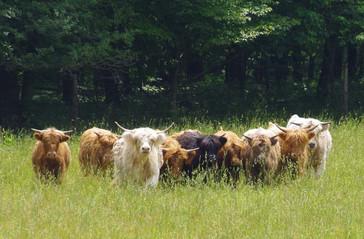 Heifer group.