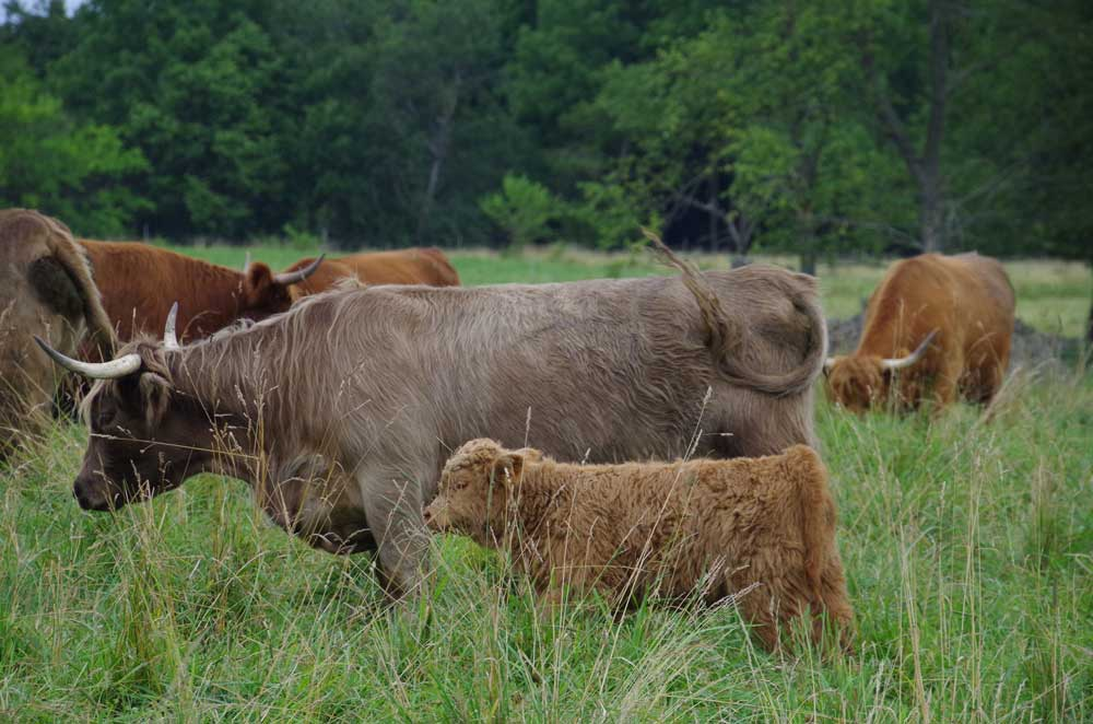 Hadley with calf LEA Loki