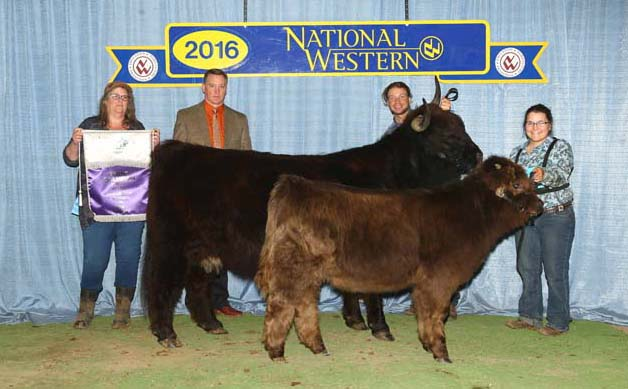 Hedy takes 2016 Cow/calf