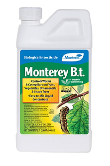 Monterey B.t. Qt