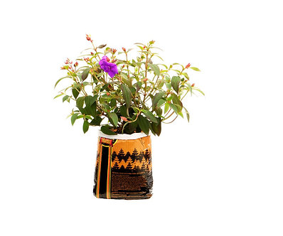 Royal Gold Tupur .75 cu ft (5 Gallon Plant in Bag)