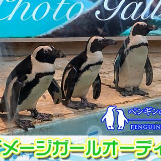 ペンギンのいるBARイメージガールオーディション