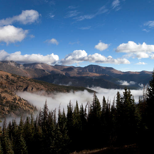 Temperate Coniferous Forests