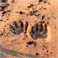 Footprints and tracks collection